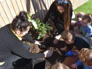 schools-tree-day-3
