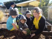 schools-tree-day-7